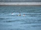 Rhein bei Basel mit Schwimmern